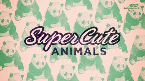 Самые милые животные